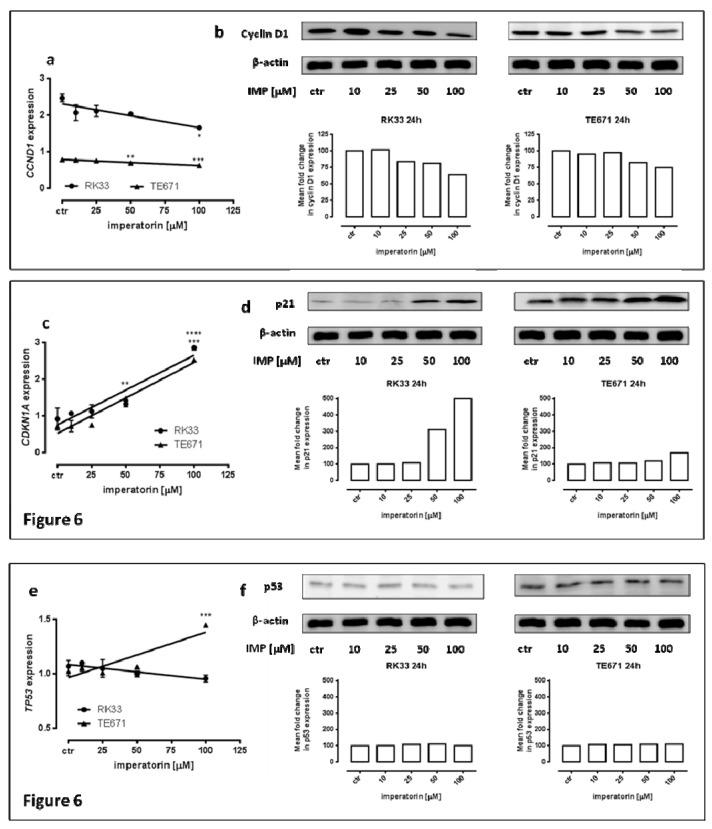p21, cyclin D1, and p53 expression on protein and mRNA level in human rhabdomyosarcoma and larynx cancer cell lines. Quantification of CCND1 ( a ) and CDKN1A ( c ) and TP53 ( e ) genes expression by means of qPCR in RK33 and TE671 cells exposed (24 h) to imperatorin (25–100 µM) compared with controls (* p