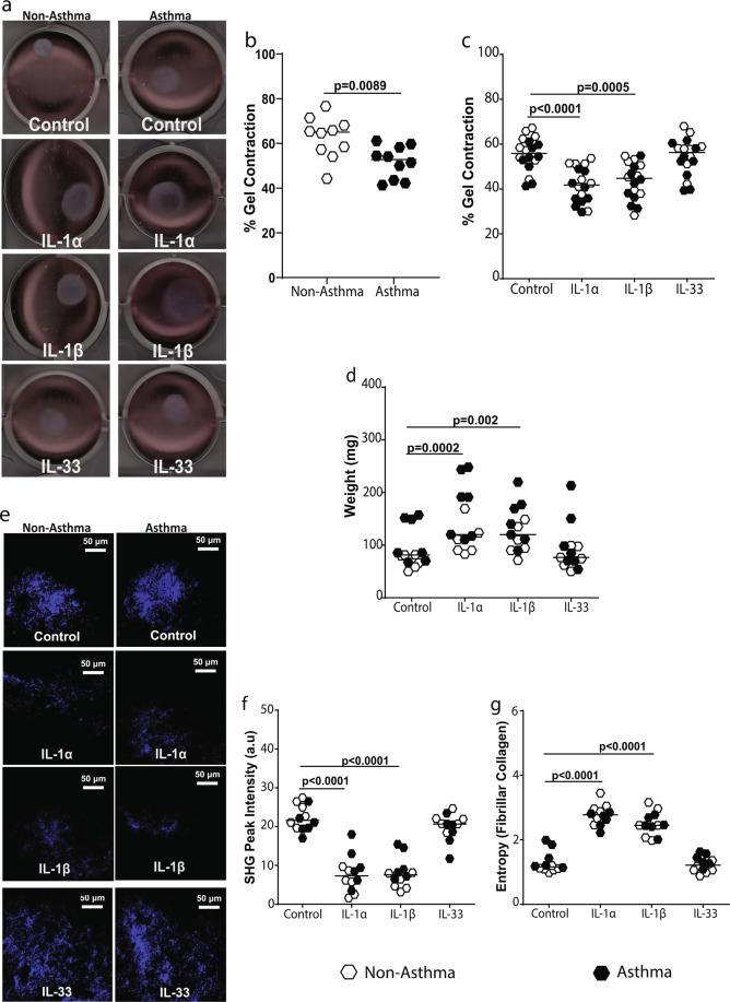 IL-1 but not IL-33 affects fibroblast <t>collagen</t> I gel contraction and fiber formation. Primary airway fibroblasts (PAFs) from non-asthmatics and asthmatics were grown to confluence and seeded on 3D collagen I gels in the presence or absence of 1 ng/ml IL-1α, IL-1β or IL-33 and allowed to migrated into and contract the gel for 24 hours. ( a ) Representative gel contraction images after the 24 hour stimulation of non-asthmatic and asthmatic PAF-seeded gels with 1 ng/ml IL-1α, IL-1β or IL-33, ( b ) Percentage gel contraction comparing control non-stimulated rates of non-asthmatic and asthmatic -derived PAFs, ( c ) Percentage gel contraction after stimulation with IL-1α, IL-1β and IL-33, ( d ) semi-dry weight of contracted gels after stimulation with IL-1α, IL-1β and IL-33. ( e ) Representative images of fibrillar collagen taken with second harmonic generation (SHG) microscopy in gels, ( f ) SHG peak intensity of fibrillar collagen. ( g ) Entropy of collagen fibers, calculated using texturel analysis of SHG images. Representative images are 20X magnification and scale bars are provided. Exact P values indicated. SHG images are pseudo-coloured, showing fibrillar collagen in blue (un-labeled).