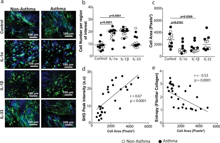 Interleukin-1 alters fibroblast interaction with collagen I. Primary airway fibroblasts from non-asthmatics and asthmatics were grown to confluence and seeded on collagen I gels in the presence or absence of 1 ng/ml IL-1α, IL-1β or IL-33 and allowed to migrate through and contract for 24 hours. Collagen I gels were then stained with DAPI to localize cell nuclei and Phalloidin 488 for F-actin in the seeded fibroblasts. ( a ) Representative composite images of co-localized un-labeled second harmonic generation images (SHG, shown in blue) and two-photon excited fluorescence labeled with DAPI and phalloidin (TPEF, shown in green) of fibrillar collagen and fibroblasts respectively in gels from non-asthmatic and asthmatic PAF's ( b ) Average number of cells per region of interest, ( c ) Cell area of fibroblasts seeded in collagen I gels after contraction. ( d ) Correlation of fibroblast cell area with SHG peak intensity of fibrillar collagen, (e ) Correlation of fibroblast cell area with collagen fiber entropy. Representative images are 20X magnification and scale bars are provided. Exact P values indicated.