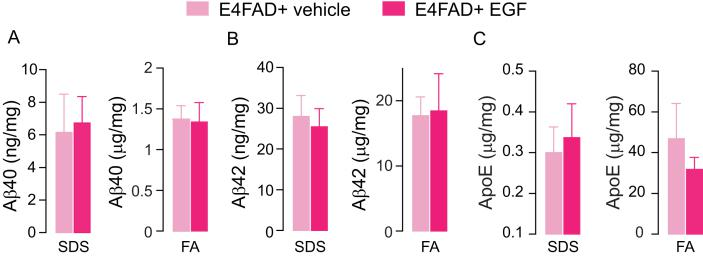 Aβ and ApoE levels are not modulated by EGF treatment in female E4FAD+ mice. There are no differences in hippocampal levels of A. Aβ40 (SDS: t(14) = 0.212, p = 0.835. FA: t(14) = 0.123, p = 0.904), B. Aβ42 (SDS: t(14) = 0.397, p = 0.698. FA: t(14) = 0.11, p = 0.914) or C. apoE (SDS: t(14) = 0.315, p = 0.734. FA: t(14) = 0.945, p = 0.361) levels in EGF-treated E4FAD+ mice compared to vehicle treatment when assessed by ELISA. Data expressed as mean +/- SEM. p > 0.05 by Student's t-test. n = 13 (vehicle-treated E4FAD- mice), 12 (EGF-treated E4FAD- mice), 7 (vehicle-treated E4FAD+ mice) and 9 (EGF-treated E4FAD+ mice).