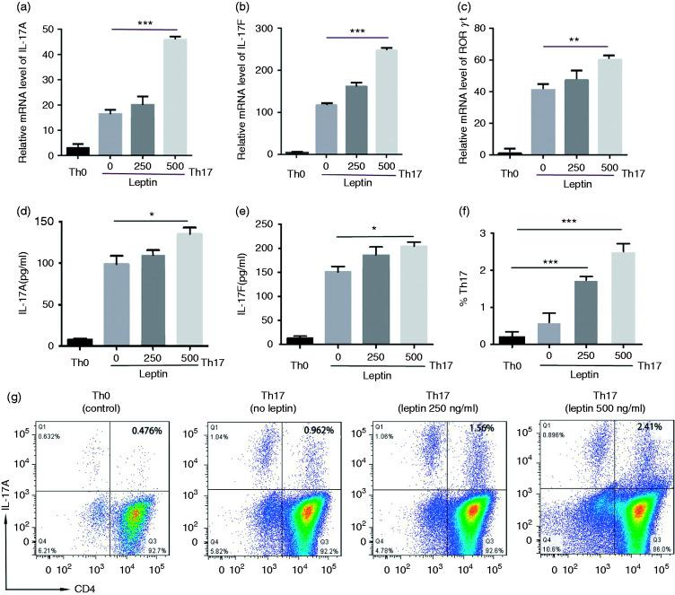 Leptin promotes the differentiation of Th17 cells from MRL/lpr lupus mice. mRNA levels of (a) IL-17A, (b) IL-17F, and (c) RORγt by qPCR and (d) IL-17A and (e) IL-17F by ELISA in CD4 + T cells from MRL/lpr lupus mice stimulated under Th17 polarizing conditions and treated with leptin at scalar doses during the last 18 h of culture. Flow cytometry results of CD4 + IL-17 + from CD4 + T cells treated as above. (g) Representative and (F) cumulative data from two experiments ( n = 10). *P