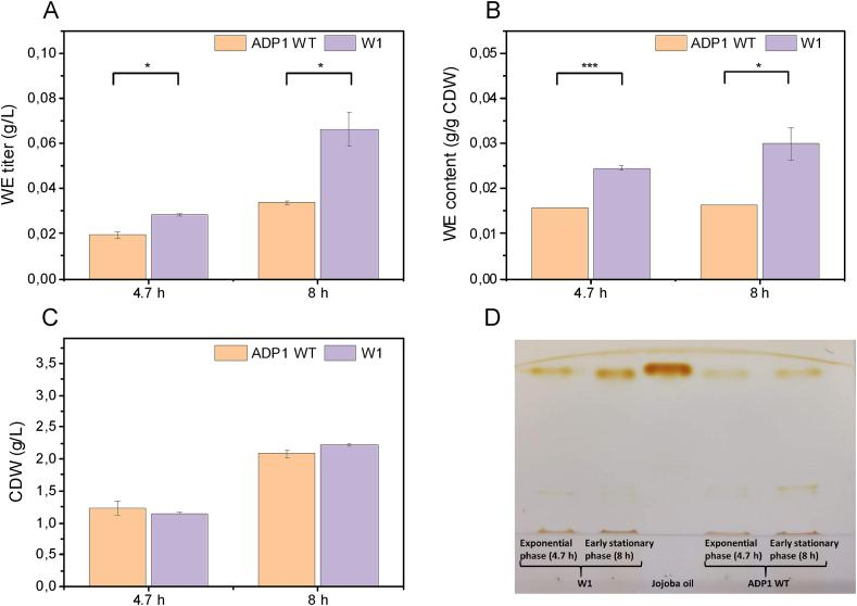 Comparison of (A) WE titer, (B) content and (C) CDW between ADP1 WT and W1 when grown in 50% baker's yeast hydrolysate. The results represent the mean of two replicates and the error bars represent the standard deviations. (D) WE visualization by TLC. For each strain, the same amount of biomass was taken for lipid extraction. The extracted lipid was analyzed with TLC. Jojoba oil was used as the standard of WEs. ∗ P ​