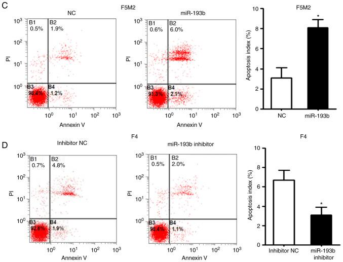 miR-193b inhibits cell cycle progression and induces apoptosis. (A) Transfection of F5M2 cells with miR-193b mimic induced cell cycle arrest in G 1 phase, (B) whereas transfection of F4 cells with miR-193b inhibitor resulted in an increased percentage of cells in S and G 2 phases. (C) Upregulation of miR-193b induced apoptosis of F5M2 cells, (D) whereas downregulation of miR-193b in F4 cells inhibited apoptosis. Data are presented as the mean ± SD of at least three independent experiments. *P