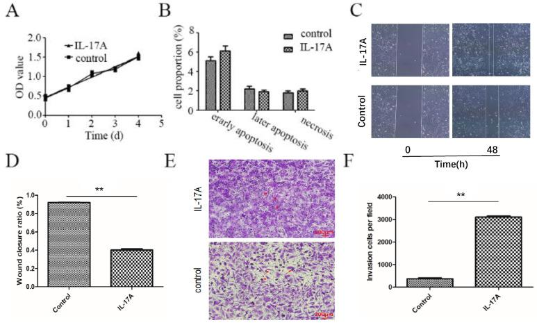 The pro-metastasis effect of IL-17A in GBC. (A) IL-17A has no effect on the proliferation of GBC cells. (B) IL-17A has no effect on the apoptosis of GBC cells. (C and D) The effect of IL-17A on cell migration was detected by using wound healing assays. IL-17A enhanced the motility of GBC cells. (E) The pro-invasion effect of IL-17A on GBC cells was assay via transwell assay. (F) The invasion cells per field were calculated. All data are presented as the mean±standard deviation. * p