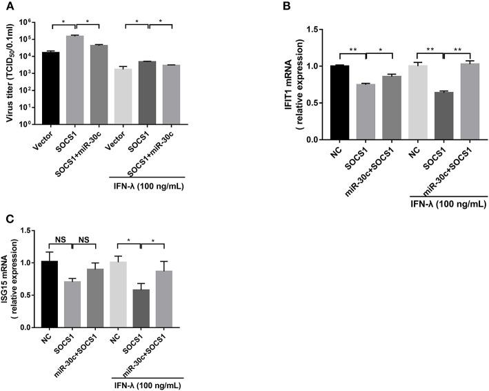 Mir-30c-5p inhibited the infection of PEDV by regulating the expression of <t>SOCS1.</t> (A) SOCS1 overexpression increased PEDV infection and undermined the anti-PEDV activity of IFN-λ. Vero E6 cells were transfected as described with <t>pCAGGS-HA,</t> pCAGGS-SOCS1, and miR-30c-5p for 24 h, followed by incubation with porcine IFN-λ (100 ng/ml) or DMEM for 12 h. The cells then were infected with PEDV at an MOI of 0.1; PEDV infection was determined at 36 hpi. (B,C) miR-30c-5p abolished the impairment of the overexpression of SOCS1 to IFN-λ signaling under IFN-λ-stimulated or PEDV-infected conditions. E6 cells were treated as described in the legend for panel A. The cells were collected for RT-qPCR analysis of IFIT1 and ISG15 expression relative to that of GAPDH. Error bars, mean ± SEM ( n = 3 independent experiments). * P
