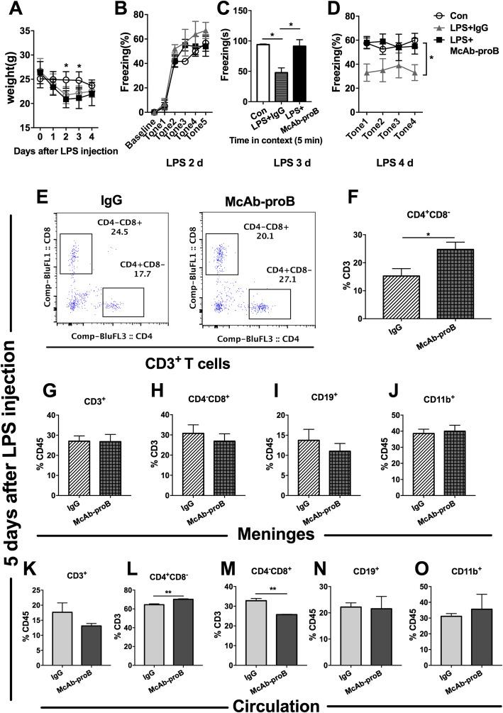 Systemic blockade of proBDNF ameliorated cognitive dysfunction and restored meningeal and peripheral CD4 + T cell ratio in septic mice. Mice were i.p. injected with proBDNF 30 min before LPS (5 mg kg −1 ) injection. Fear conditioning testing was performed 1 day after LPS injection. Meninges and peripheral blood were harvested 5 days after LPS injection for flow cytometry. a McAb-proB did not influence the weight of mice or b fear conditioning acquiring. c , d McAb-proB greatly alleviated memory deficit induced by LPS injection in mice as indicated by the increased freezing time in ( c ) contextual and ( d ) cued fear conditioning tests in the McAb-proB group relative to the IgG control. n = 8 in each group. Data a , b , and d were analyzed by repeated measures ANOVA and followed by Bonferroni post hoc tests. Data c was analyzed by one-way ANOVA and followed by Tukey post hoc test, * P