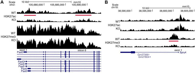 ChIP-seq findings for Pax6 and Spry4 that lack RARE enhancers or silencers. These genes are good candidates for being indirect transcriptional targets of RA as their RA-regulated ChIP-seq peaks do not contain RAREs. (A) Pax6 has 2 RA-regulated peaks (red bars) for H3K27ac (decreased) when RA is lost in E8.5 trunk tissue from Aldh1a2 -/- (KO) compared with WT; these RA-regulated peaks do not contain RAREs, suggesting that transcription of Pax6 is indirectly activated by RA. (B) Spry4 has an RA-regulated peak for H3K27me3 (decreased) when RA is lost with no associated RARE, suggesting that transcription of Spry4 is indirectly repressed by RA. ChIP-seq, chromatin immunoprecipitation sequencing; E, embryonic day; H3K27ac, histone H3 K27 acetylation; H3K27me3, histone H3 K27 trimethylation; KO, knockout; RA, retinoic acid; RARE, RA response element; WT, wild-type.