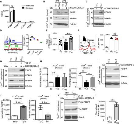 Activated T cells up-regulate PCBP1. ( A ) Expression of mRNA encoding PCBP1-4 in human <t>CD3</t> + T cells before (Unstimulated) and after (Stimulated) stimulation for 24 hours with anti-CD3 and anti-CD28 (obtained from Gene Expression Omnibus accession code GSE13887). n = 4 biologically independent samples. ( B and C ) Immunoblotting for total PCBP1 and moesin expression in human CD4 + (B) and CD8 + (C) T cells left unstimulated (T0 and Tc-0) or stimulated (Th0 and Tc-1) with antibodies against CD3 and ICOS with IL-2 for 4 days. β-Actin was used as loading control. ( D ) Flow cytometry (left) and quantification (right) of PCBP1 expression in subsets of splenic lymphocytes from mice. FITC, fluorescein isothiocyanate. ( E and F ) Relative Pcbp1 mRNA expression (E) and fluorescence-activated cell sorting (FACS) analysis and PCBP1 mean fluorescence intensity (MFI) in subsets of in vitro polarized T cells. (E) n = 8; (F) n = 4. PE, phycoerythrin. ( G and H ) Immunoblotting of moesin, PCBP1, FoxP3, and β-actin (G) and quantification for PCBP1 and moesin (H) using splenic mouse CD4 + T cells activated with anti-CD3 and anti-CD28 for 3 days in the absence (Th0) or presence (iT reg ) of TGF-β in vitro. n = 5. ( I and J ) Mouse splenic CD8 + T cells from the same experiments as (G and H). n = 5. ( K and L ) Immunoblotting for phosphorylated and total PCBP1 (K) in Th0 and iT regs and quantification (L). (D) Error bars represent means ± SE and (E, F, H, J, and L) SD; * P