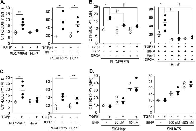 Potentiation of the tBHP-triggered lipid peroxidation by TGF-β1 in PLC/PRF/5 and Huh7 cells. a PLC/PRF/5 ( n = 6) and Huh7 cells ( n = 4) were treated with either vehicle or 5 ng/mL of TGF-β1 for 2 days. At 1 h before the measurement, tBHP was added at doses of 100 µM to PLC/PRF/5 cells ( n = 3) and 50 µM to Huh7 cells ( n = 4)(right). b Cells ( n = 3) were pretreated with 20 µM Fer-1 1 h before TGF-β1 treatment. DFOA was added at doses of 100 µM 1 h before the measurement in PLC/PRF/5 cells or before tBHP treatment in Huh7 cells. TGF-β1 and tBHP were treated as described in a . The first two groups in Huh7 cells (tBHP, TGF-β1 with tBHP) are identical to a as these experiments were performed at once, but displayed again to enhance understanding. c PLC/PRF/5 ( n = 4) and Huh7 cells ( n = 4) were treated with either vehicle or 5 ng/mL TGF-β1 for 8 days. tBHP was added 1 h before measurement at doses of 100 µM in PLC/PRF/5 cells ( n = 4) and 50 µM in Huh7 cells ( n = 4). d SK-Hep1 ( n = 3) and SNU475 ( n = 3) cells were treated with 5 ng/mL of TGF-β1 for 2 days and then further incubated with tBHP at the indicated concentrations for 1 h. Lipid peroxidation was measured with the BODIPY® C11 probe and expressed as the mean fluorescence intensity (MFI); multiple analyses are shown as the mean ± SD. Representative histograms were shown in supplemental Fig. 1 . * P