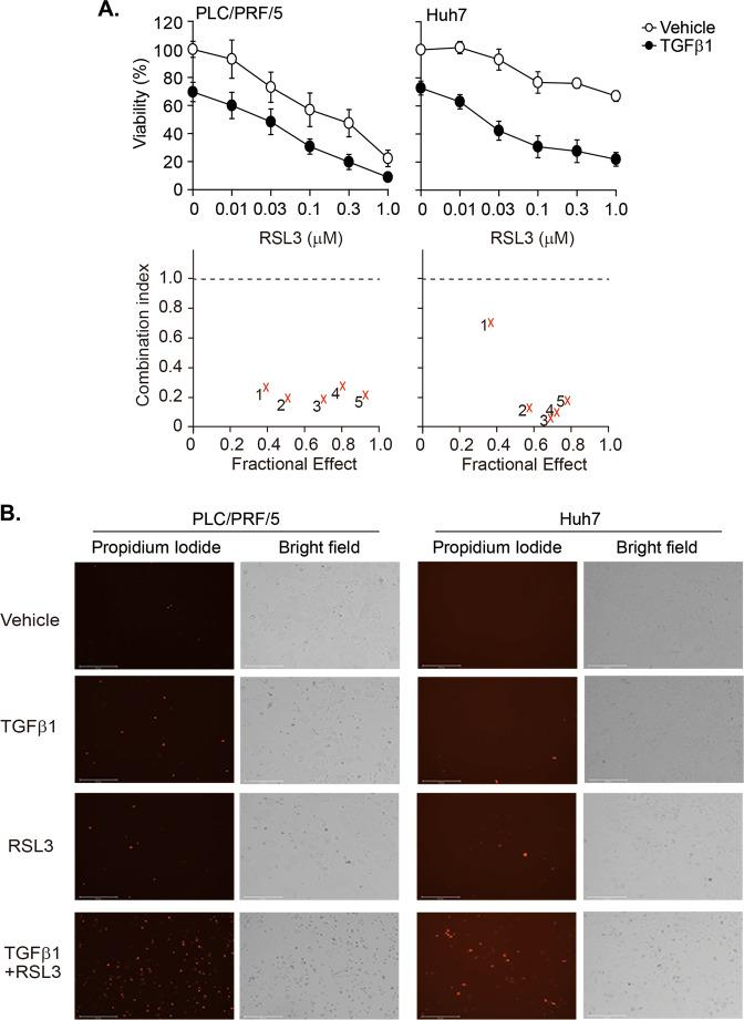 TGF-β1-mediated vulnerability to GPX4 inhibition in PLC/PRF/5 and Huh7 cells. Cells were incubated with vehicle or TGF-β1 (0.03 ng/mL for PLC/PRF/5 cells and 5 ng/mL for Huh7 cells) for 2 days. Then, the cells were exposed to RSL3 in a dose-dependent manner in the presence or absence of TGF-β1 for another 2 days. a Cell viability was measured with the CellTiter Glo® assay, and the CI was calculated following the Chou–Talalay method. 1~5 corresponds to the data for RSL3 dose at 0.01 (1), 0.03 (2), 0.1 (3), 0.3 (4), and 1.0 (5) µM. b Cell images were captured 1 day after treatment with 0.03 µM of RSL3. The cells were stained with 1 µg/mL PI for 20 min and then monitored with the EVOS® cell imaging system.