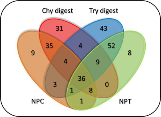 Venn diagram showing the number of individually labelled sites of TMPs from the HL60 cells, separated by enzymes and their treatment time. Chy digest and Try digest: merged chymotrypsin and trypsin pre-digested samples [10–20 min and 15–25 min, respectively]. NPC and NPT: control samples for chymotrypsin and trypsin enzyme treatments, respectively.