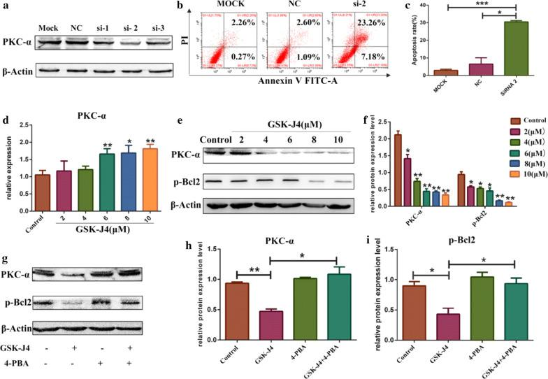 The role of ER stress in GSK-J4-regulated PKC-α/p-Bcl2 pathway inhibition. a After treatment with PKC-α siRNA NC, siRNA1, siRNA2 and siRNA3, the expression level of PKC-α was detected by Western blotting. b After treated with siRNA2, the ratio of apoptotic cells was detected using flow cytometry. c Statistical analysis of the apoptotic rate of KG-1a treated with siRNA2. Values represent the mean ± SD of three independent experiments. * p