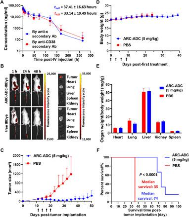 Pharmacokinetics and pharmacodynamics in mice. ( A ) Pharmacokinetics of CD38 C-fusion IgG in mice. A single dose (3 mg/kg) of CD38 C-fusion IgG was administered by intravenous (IV) injection into CD-1 mice ( n = 5). Plasma concentrations of CD38 C-fusion IgG were determined by two sandwich ELISAs using the same capture antibody (Ab) [anti-human IgG (H+L)] but different detection antibodies (anti-κ light chain or anti-CD38). ( B ) Biodistribution of anti-HER2 ARC-ADC in mice. HCC1954 cells were subcutaneously implanted into the flank of female NSG mice. IRDye-labeled anti-HER2 ARC-ADC (5 mg/kg) or free IRDye at the same molar concentration was administered intravenously through tail vein 1 week after tumor implantation. Mice were then imaged at 1, 24, and 48 hours after injection, followed by euthanasia and imaging of harvested tumors and major organs. ( C ) In vivo efficacy of anti-HER2 ARC-ADC. HCC1954 cells were subcutaneously implanted into the flank of female NSG mice. Once the tumor sizes reached 100 mm 3 , mice ( n = 6) were treated with PBS or ARC-ADC (5 mg/kg) by intravenous injection (black arrows) every 3 days for a total of four times. ( D ) Body weights of mice during the in vivo efficacy study. ( E ) Ratios of major organ weight to body weight of mice at the end of in vivo efficacy study. ( F ) Kaplan-Meier survival curve for PBS- and ARC-ADC–treated groups.