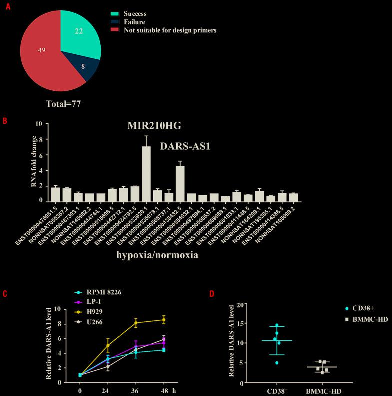 DARS-AS1 is upregulated in myeloma cells in a hypoxic environment. (A) RNA-sequencing analysis revealed 77 differentially expressed long non-coding (lnc)RNA between myeloma cells cultured in normoxic or hypoxic conditions. (B) Twenty-two upregulated lncRNA in U266 cells were successfully identified by quantitative polymerase chain reaction (Q-PCR). (C) Multiple myeloma cell lines were cultured under hypoxic culture conditions (1% oxygen concentration) for 48 h and DARS-AS1 expression levels were determined by Q-PCR and normalized to those of 18S rRNA. (D) CD38 + cells derived from bone marrow of patients with active myeloma and normal human bone marrow mononuclear cells were cultured in a hypoxic environment (1% oxygen concentration) for 24 h. The DARS-AS1 expression levels were determined by Q-PCR and normalized to those of 18S rRNA. BMMC-HD: bone marrow mononuclear cells from healthy donors.