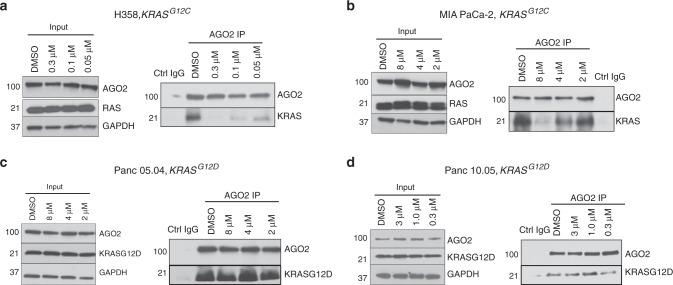 ARS-1620, a G12C-specific inhibitor, disrupts the KRAS G12C -AGO2 interaction. IP of endogenous AGO2 followed by immunoblot to detect KRAS in KRAS G12C harboring ( a ) H358 and ( b ) MIA PaCa-2 cells treated with varying concentrations of ARS-1620 for three and nine hours, respectively. KRAS G12D harboring ( c ) Panc 05.04 and ( d ) Panc 10.05 cells, respectively, treated with ARS-1620 for 24 h followed by AGO2 IP and immunoblot analysis of KRAS G12D . For each cell line, input blots for AGO2 and RAS are shown.
