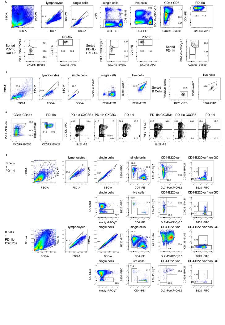 Functional comparison of CXCR3 + PD-1 lo Tsh, CXCR3 - PD-1 lo CD4 + T cells and PD-1 hi cells in B and T cell co-cultures. ( A ) Gating strategy used to sort CXCR3 + PD-1 lo Tsh, CXCR3 - PD-1 lo CD4 + T cells and PD-1 hi CXCR5 +/- . Upper row (pseudo-color plots) shows pre-sorted cells prepared from pooled splenocytes of two-years old C57Bl/6 mice. Lower row (black dot plots) shows purity and phenotype of the sorted populations. ( B ) Gating strategy to sort B220 + CD19 + B cells. Pseudo-color plots on the left-hand side show pre-sorted cells prepared from pooled splenocytes of 2-year-old C57Bl/6 mice and enriched for B cells by negative magnetic cell sort on Miltenyi column. Black dot plots on the right-hand side show B220 + CD19 + B cells purity after FACS-sort. ( C ) PMA/ionomycin-stimulated pre-sorted cells from pooled splenocytes of two-years old C57Bl/6 mice were assessed for CD40L, IL-21, and IFN-γ production. Pseudo-color plots show gating strategy for identification of CD4 T cell subsets and contour plots show cytokine production by the assessed populations. ( D ) Analysis of 5 days co-cultures by flow cytometry. Representative plots from co-culture wells with B cells and PD-1 hi cells (upper plots) and B cells and CXCR3 + PD-1 lo Tsh cells (lower plots) are shown. Data are representative of two independent experiments. Legends for figure source data.