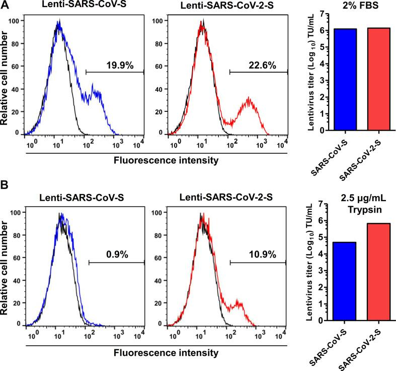 Transduction optimization of SARS-CoV and SARS-CoV-2 pseudoviruses. Generated SARS-CoV and SARS-CoV-2 pseudoviruses were transduced into Vero-E6 cells. Different transduction medium with (A) 2% FBS or (B) 2.5 μg/ml trypsin. Using transduction medium with 2% FBS showed higher transduction rate for SARS-CoV and SARS-CoV-2 pseudoviruses. Using transduction medium with 2.5 μg/ml trypsin obviously reduced transduction rate, especially for SARS-CoV pseudoviruses.