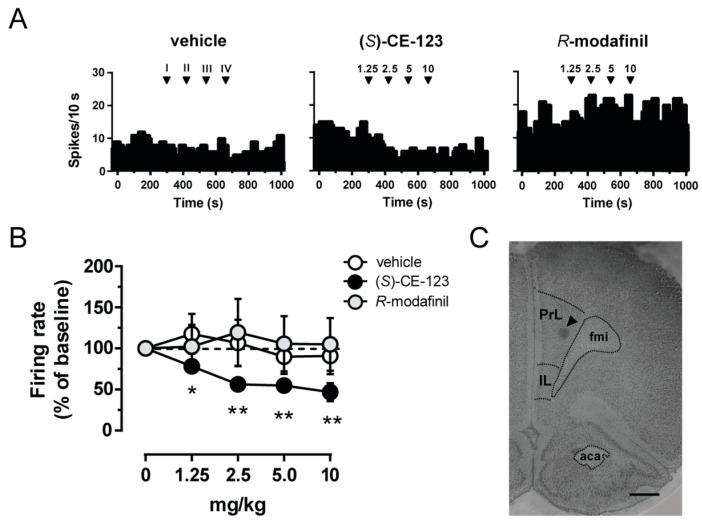 Effect of ( S )-CE-123 and R -modafinil on in vivo electrical activity of putative pyramidal cells. Representative firing rate histograms of putative pyramidal neurons ( A ) from rats that received cumulative intravenous injections of vehicle (left), ( S )-CE-123 (10 mg/kg; middle) or R -modafinil (10 mg/kg; right). Arrows indicate the time of injections and number of the dose (mg/kg). ( S )-CE-123 reduced firing frequency ( B ) in a dose-dependent manner (vehicle n = 5; R -modafinil n = 7, ( S )-CE-123 n = 7). Symbols and bars represent means ± SEM, * p