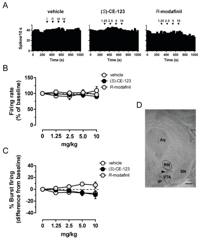Effect of ( S )-CE-123 and R -modafinil on in vivo electrical activity of putative dopamine cells. Representative firing rate histograms of putative ventral tegmental area (VTA) dopamine neurons ( A ) from rats that received cumulative intravenous injections of vehicle (left), ( S )-CE-123 (10 mg/kg; middle) or R -modafinil (10 mg/kg; right). Arrows indicate the time of injections and number of the dose (mg/kg). R -modafinil and ( S )-CE-123 did not change firing frequency ( B ) or bursting activity ( C ) of putative VTA dopamine neurons (vehicle n = 5; R -modafinil n = 6, ( S )-CE-123 n = 7). Symbols and bars represent means ± SEM, RM one-way ANOVA. ( D ) Histological brain section showing the recording site in the VTA. The black triangle indicates the pontamine sky blue dye. Abbreviations: Aq, aqueduct; RN, red nucleus; IP, interpeduncular nucleus; SN, substantia nigra; VTA, ventral tegmental area. Scale bar, 0.5 mm.