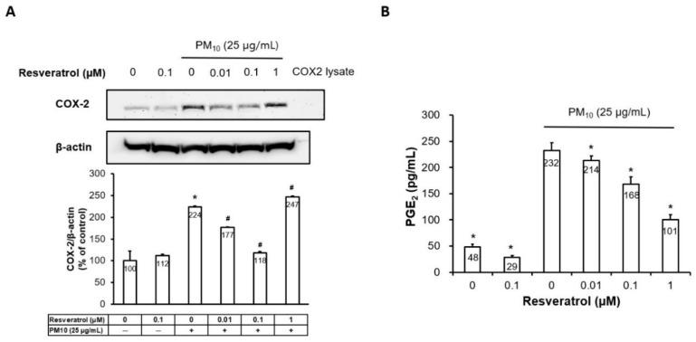 Effect of resveratrol on PM-induced COX-2 expression and PGE2 generation in human keratinocytes. ( A ) The protein expression of COX-2 determined by Western blot and densitometry. Equal amounts of protein loading were verified using an anti-actin antibody, ( B ) PGE2 generation measured by ELISA, Data are presented as the mean ± standard deviation of three independent experiments ( n = 3). * p