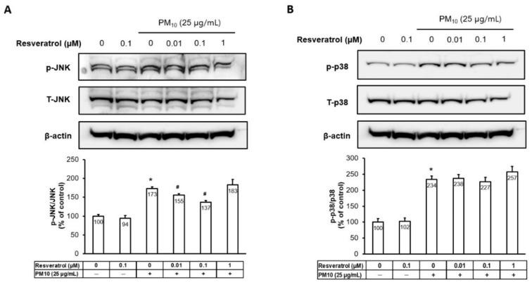 Effects of resveratrol on transcription factor activator protein-1 components and p38 MAPK phosphorylation in human keratinocytes following PM treatment. ( A ) Protein levels of JNK and ( B ) p38 MAPK were analyzed by Western blotting and densitometry. Equal amounts of protein loading were confirmed using JNK, p38, and actin antibodies. * p