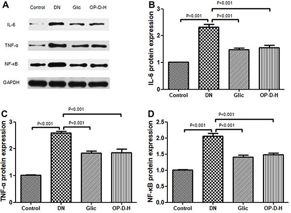 A , Western blot analysis. Effect of high ophiopogonin D (OP-D-H) on protein expression of interleukin (IL)-6 ( B ), tumor necrosis factor α (TNF-α) ( C ), and nuclear factor (NF)-κB ( D ). Data are reported as mean±SEM (n=8) (ANOVA followed by Tukey's post hoc analysis). Glic: Gliclazide.