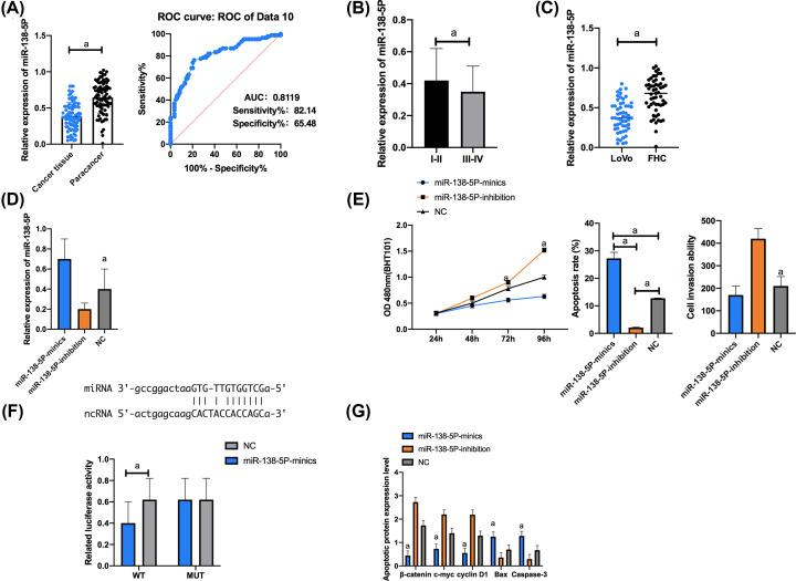 Targeting binding between lncRNA TUG1 and miR-138-5p ( A ) Expression of miR-138-5p. The AUC of miR-138-5p for CRC diagnosis was larger than 0.8. ( B ) Expression of miR-138-5p in tissues with high/moderate/low differentiation. ( C ) Compared with FHC cells, LoVo cells showed significantly down-regulated miR-138-5p. ( D ) Expression of miR-138-5p in transfected LoVo cells. ( E ) Proliferation, apoptosis, and invasion of transfected LoVo cells. ( F ) Luciferase activity of LoVo cells. ( G ) Expression of apoptosis-related proteins in transfected LoVo cells. Cell apoptosis map. a indicates P
