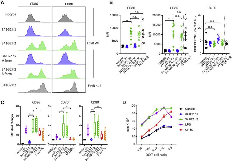 341G2 h2 Potently Activates Dendritic Cells (A) hCD40Tg and hCD40Tg/FcγRnull mice received 30 μg anti-CD40 mAbs intravenously and spleens were harvested on day 2. Expression levels of CD80 and CD86 on splenic CD11c + CD8 + DEC205 + DCs were analyzed by flow cytometry. Histograms representative of six to seven mice from two experiments. (B) Experiments same as in (A). MFI values for CD80 and CD86 are quantified, and the frequency of CD11c + CD8 + DEC205 + DC expressed as the percentage of CD11c + cells. Means ± SEM, n = 6–7, data pooled from two experiments. Each dot represents one mouse. Two-tailed, non-paired Student's t test, ∗ p