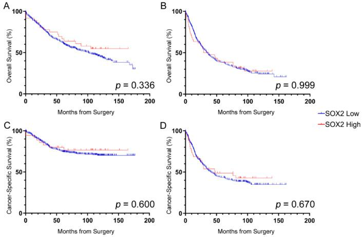 Prognostic value of SOX2 + cell densities. Overall survival ( A , B ) and cancer-specific survival ( C , D ) for patients with (a,c) stage II and (b,d) stage III CRC based on SOX2 expression. No significant associations between SOX2 density and survival were found. Log-rank p -values shown.