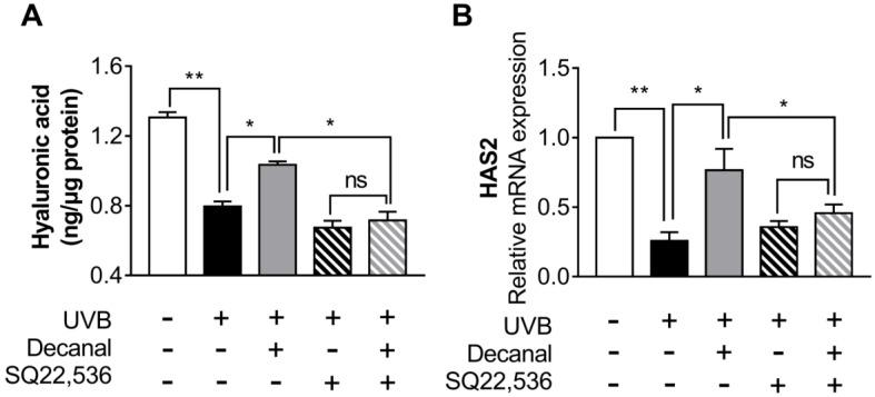 The effect of decanal on hyaluronic acid synthesis via the cAMP signaling pathway. Hs68 cells were treated with either decanal or the vehicle and exposed to UVB. Other samples were pretreated with either SQ22536 or the vehicle for 1 h before decanal treatment. ( A ) Hyaluronic acid concentrations and ( B ) the mRNA expression of HAS2 were examined. The final hyaluronic acid levels were normalized to the total cellular protein content. Data are shown as the mean ±SEM ( n = 3). Significant differences are indicated as * p