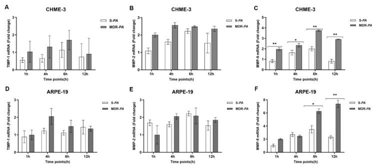 CHME-3 and ARPE-19 cells were challenged with S- PA and MDR- PA , with a MOI of 10:1. At indicated time points, the cells were collected and processed for RNA isolation; cDNA synthesis followed by RT-qPCR. The bar graphs show that there was no significant expression of MMP-2 ( A , D ) or tissue inhibitor of metalloproteinases (TIMP)-1 ( B , E ) in either CHME-3 or ARPE-19 cells. ( C , F ) Significantly elevated expression of MMP-9 was observed after infection of CHME-3 and ARPE-19 cells with MDR- PA and S- PA strains. The data are shown as the mean ± SE from three sets of independent experiments; ** p