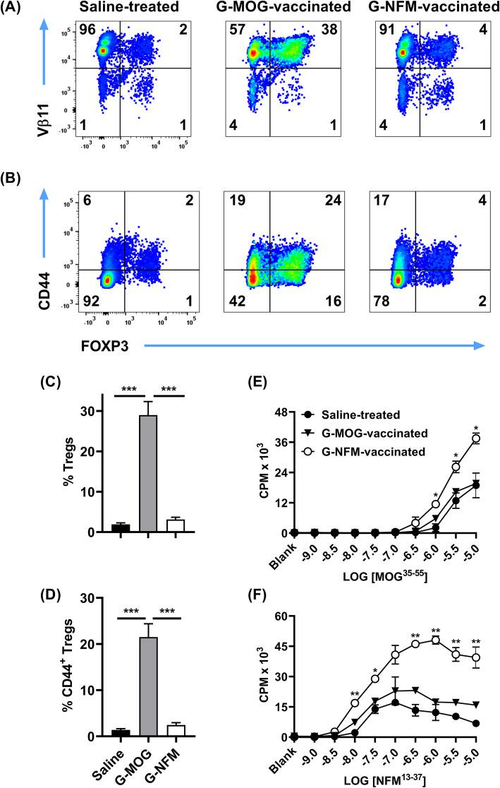 The high-efficiency GMCSF-NFM vaccine induced memory Tcon responses in 2D2-FIG mice. On day 0, 2D2-FIG mice were SC injected with 4 nmol of GMCSF-MOG, 4 nmol of GMCSF-NFM, or saline. On day 8, splenocytes were harvested from vaccinated mice, and CD4 + T cells were purified and analyzed for a Vβ11 ( y -axis), b CD44 ( y -axis), and a , b FOXP3 expression ( x -axis). To assess generality of these findings ( c , d ), data from seven controlled experiments (analysis of PBMC ranging from day 4 to day 7) were pooled to assess 2D2-FIG mice vaccinated SC with saline ( n = 24), 4 nmol of GMCSF-MOG ( n = 24), or 4 nmol of GMCSF-NFM ( n = 25) for total Treg percentages ( c ) and CD44 + Treg percentages ( d ) among CD4 + T cells. a , b , e , f Purified 2D2-FIG splenic T cells (25,000/well) from each vaccinated mouse were cultured in duplicate with 200,000 irradiated naïve splenocytes (C57BL/6) and designated concentrations (x-axis) of e MOG 35–55 and f NFM 13–37 . Cultures were pulsed with 1 μCi of [ 3 H]thymidine during the last 24 h of a 3-day culture. These data are representative of two independent experiments. Statistical significance was analyzed by use of a one-way ANOVA. ( *p