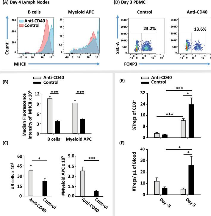Administration of a CD40 agonist in vivo inhibited the Treg-inductive activity of GMCSF-MOG. On day − 2 and 0, 2D2-FIG mice ( n = 7/group) were injected i.p. with 100 μg of an anti-CD40 mAb (clone FGK4.5, rat anti-mouse CD40, IgG2a) or control mAb (clone 2A2, rat anti-trinitrophenol, IgG2a) in 500 μl saline. All mice were injected with 4 nmol of GMCSF-MOG on day 0. PBMC were analyzed on day − 8 before vaccination and day 3 post-vaccination for side-scatter (SSC), CD3, and FOXP3. Lymph nodes were harvested and analyzed on day 4 for CD4, CD11b, MHCII, and FOXP3. Shown are a representative histograms analyzed for MHCII expression ( x -axis), b MHCII median fluorescence intensity, and c numbers of CD4 − CD11b − MHCII + cells (B cells) and CD11b + CD4 − cells (myeloid APC) from lymph nodes on day 4. Also shown are d representative dot plots of CD3 + T cells analyzed for SSC ( y -axis) and FOXP3 ( x -axis) from blood on day 3 together with percentages e and numbers f of Tregs (per μl of blood) on days − 8 and 3. Statistical significance was analyzed by use of a one-tailed t test. ( *p