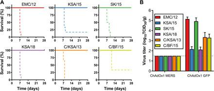 ChAdOx1 MERS provides cross-protection against different MERS-CoV strains in the mouse model. ( A ) Survival curves of ChAdOx1 MERS–vaccinated (solid line) and ChAdOx1 GFP–vaccinated (dashed line) hDPP4 mice challenged with MERS-CoV. ( B ) Infectious virus titers in lung tissue collected at 3 DPI from hDPP4 mice challenged with MERS-CoV. Mean titer with SD is shown.