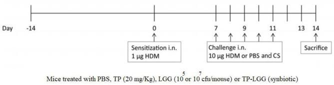 Schematic overview of the experimental protocol. BALB/c mice ( n = 6/group) were intranasally sensitized (i.n.) with house dust mite (HDM) or PBS on day 0 and were challenged i.n. for five consecutive days ( 7 – 11 ) with HDM or PBS. The oral gavage treatment started 2 weeks prior to sensitization. By oral gavage, the mice were received 20 mg/kg TP (prebiotic), or 10 5 or 10 7 cfu/mouse LGG (probiotic) or turmeric in combination with 10 5 or 10 7 cfu/mouse of LGG (synbiotic) once a day, throughout the study. The mice were sacrificed on day 14.