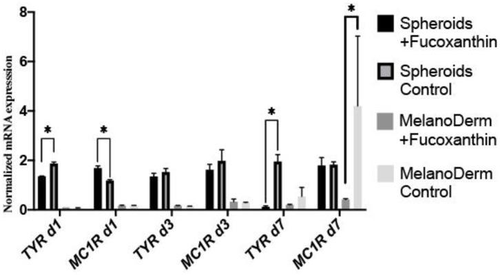 Real-time PCR analysis of TYR and MC1R expression in MelanoDerm™ tissue equivalents and spheroids from human melanocytes on Days 1, 3, and 7 in the presence of fucoxanthin and in the control group with growth medium. * p