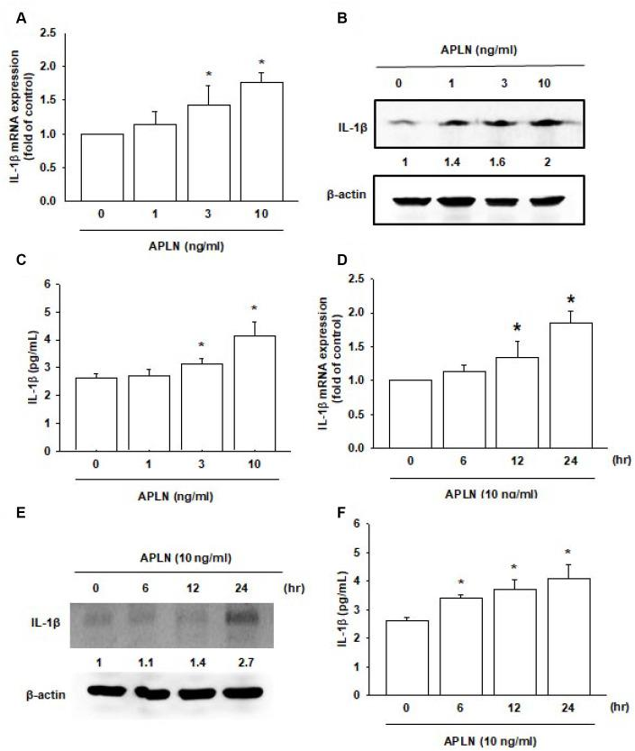 APLN stimulates IL-1β expression in OASFs in concentration- and time-dependent manners. ( A ) Human OASFs were incubated with 0, 1, 3, and 10 ng/mL of APLN for 24 h, and IL-1β mRNA expression levels were examined by RT-qPCR (n=4). ( B ) OASFs were incubated under various concentrations of APLN for 24 h, and IL-1β expression levels were examined by Western blot (n=3). ( C ) OASFs were cultured under various concentrations of APLN for 24 h, and excreted IL-1β were examined by ELISA assay (n=5). ( D ) OASFs were incubated with 10 ng/mL of APLN for 0, 6, 12, and 24 h. IL-1β mRNA levels were examined by RT-qPCR (n=4). ( E ) IL-1β protein synthesis levels were examined by Western blot (n=3). ( F ) Excretion of IL-1β protein levels in human OASFs was examined by ELISA (n=5). * p