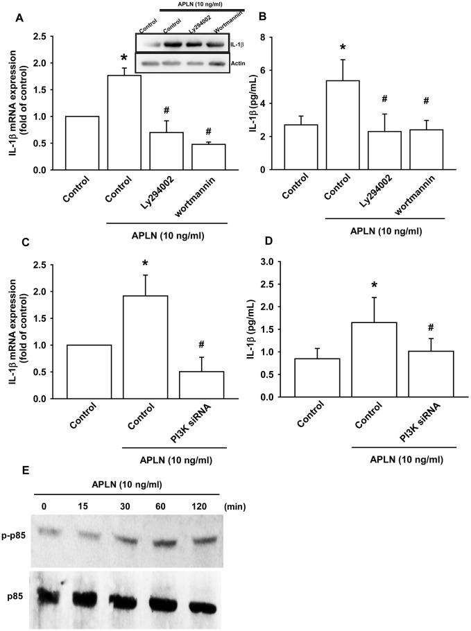 PI3K phosphorylation is involved in APLN-induced <t>IL-1β</t> synthesis. ( A ) OASFs were pretreated with PI3K inhibitors (LY294002, Wortmannin; 10 μM) for 30 min, then incubated with APLN (10 ng/mL) for 24 h. IL-1β mRNA and protein levels were examined by RT-qPCR (n=4) and Western blot (n=3) assays, respectively. ( B ) OASFs were pretreated with PI3K inhibitors (LY294002, Wortmannin; 10 μM) for 30 min, then incubated with APLN (10 ng/mL) for 24 h. Excreted IL-1 β protein levels were examined by ELISA (n=5). ( C ) OASFs were transfected with PI3K siRNA (1 μg) then incubated with APLN (10 ng/mL) for 24 h. IL-1β mRNA levels were examined by ELISA assay (n=5). ( D ) OASFs were transfected with PI3K siRNA (1 μg), then incubated with APLN (10 ng/mL) for 24 h. Excreted IL-1β protein levels were examined by ELISA assay (n=5). ( E ) OASFs were incubated with APLN for the indicated time intervals, and the extent of PI3K phosphorylation was examined by Western blot (n=3). * p