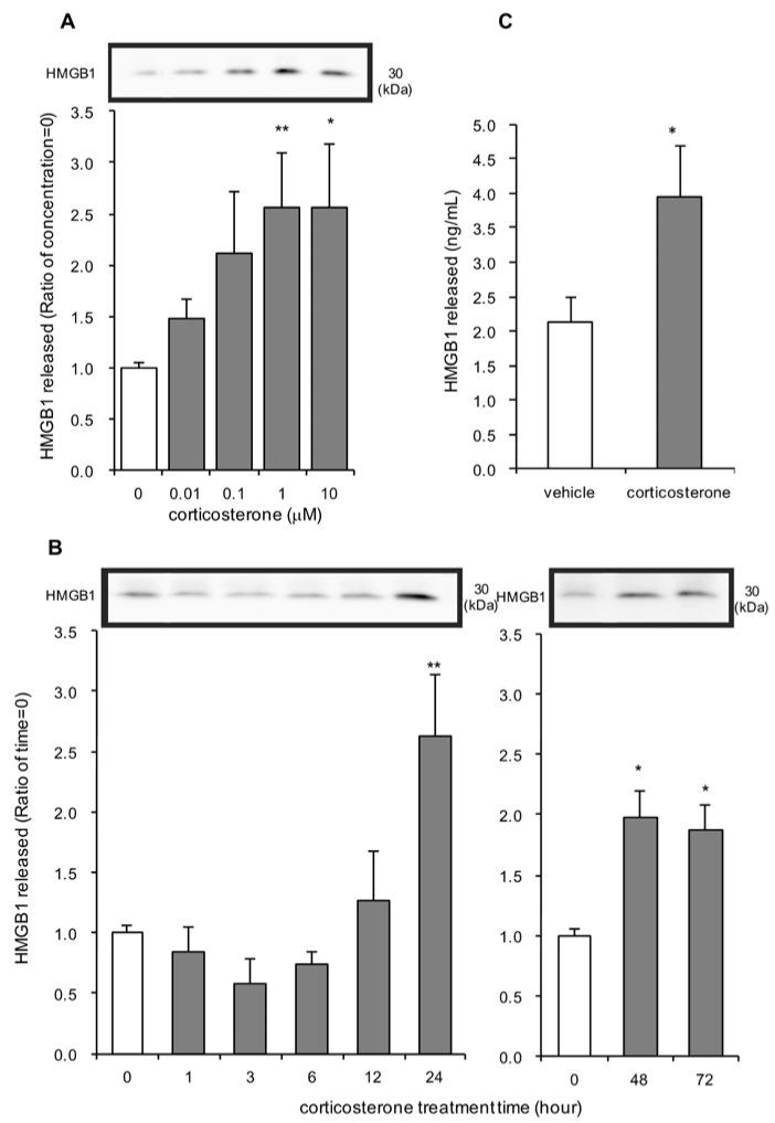 The effect of corticosterone on high-mobility group box-1 (HMGB1) release in primary cultured cortical astrocytes. ( A ) Increasing concentrations of corticosterone induced HMGB1 release from astrocytes. Cells were treated with the indicated concentrations of corticosterone for 24 h, and the amount of HMGB1 in the media was analyzed by Western blotting. Representative blots are shown (HMGB1: 30 kDa). The data are expressed as the mean ± SEM. * p