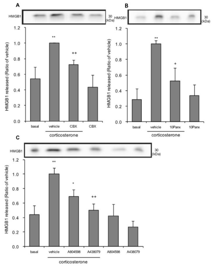 The effects of pannexin-1 inhibitors and P2X7 antagonists on corticosterone-induced HMGB1 release in primary cultured cortical astrocytes. ( A ) Astrocytes were pretreated with 10 μM carbenoxolone (CBX) for 30 min, and subsequently treated with 1 μM corticosterone for 24 h. The amount of HMGB1 in the media was quantified by Western blotting. Representative blots are shown (HMGB1: 30 kDa). The data are expressed as the mean ± SEM. ** p