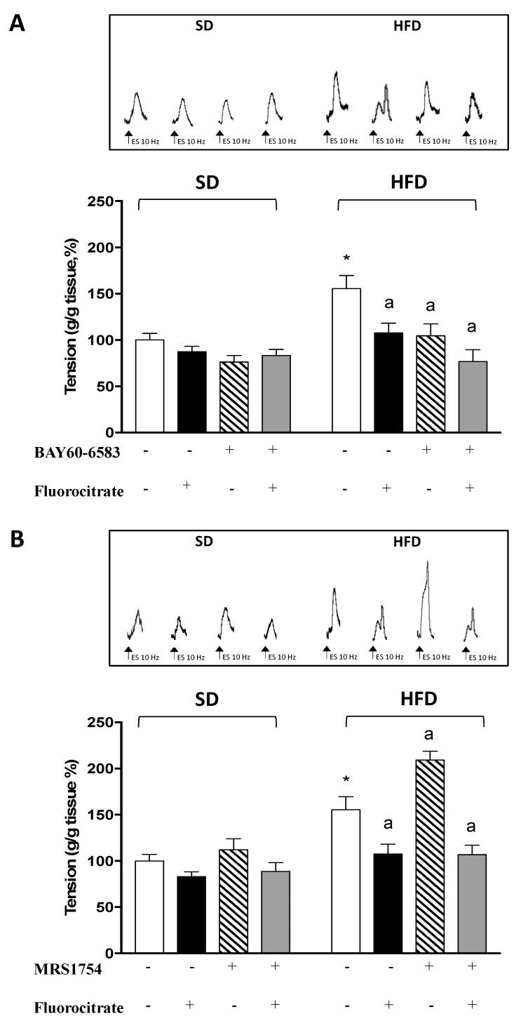 Effects of 1 μM BAY60-6583 ( A ) or 10 nM MRS1754 ( B ) on tachykininergic contractions elicited, in the absence or presence of fluorocitrate (50 μM, FC), by electrical stimulation of longitudinal smooth muscle preparations of distal colon from mice fed with standard diet (SD) or high fat diet (HFD). Colonic preparations were maintained in Krebs solution containing 100 μM N ω -nitro-L-arginine methylester (L-NAME), 10 μM guanethidine, 1 μM atropine, 1 μM GR159897 (NK 2 receptor antagonist), and 1 μM SB218795 (NK 3 receptor antagonist). Each column represents the mean ± SEM (n = 8). * p