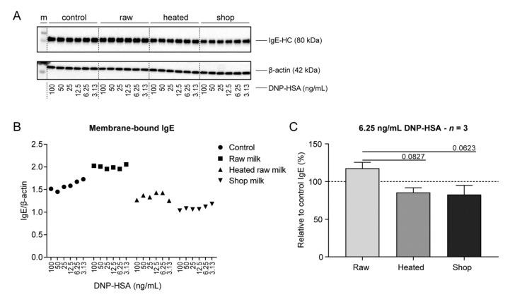 Membrane-bound IgE expression retained after DNP-HSA stimulation in raw milk-treated BMMC. After incubation with the different milk types and IgE-mediated activation by a range of DNP-HSA concentrations, BMMC were directly lysed in Triton X-100 for SDS-PAGE and immunoblotting. ( A ) Triton X-100 soluble fraction of BMMC lysates immunoblotted for IgE and β-actin. ( B ) Densitometric values of IgE normalized to β-actin. ( C ) Membrane-bound IgE expression relative to the control group at 6.25 ng/mL DNP-HSA. Densitometric values are representative of three independent experiments ( A – B ). Membrane-bound IgE expression at 6.25 ng/mL DNP-HSA is presented as mean ± SEM of three independent experiments ( n = 3; C ). Statistical analysis was performed compared to the raw milk group using one-way ANOVA, followed by Dunnett's multiple comparisons test. M, marker; raw, raw cow's milk; heated, heated raw cow's milk; shop, shop milk; IgE-HC, IgE heavy chain; DNP-HSA, 2,4-dinitrophenol conjugated to human serum albumin.