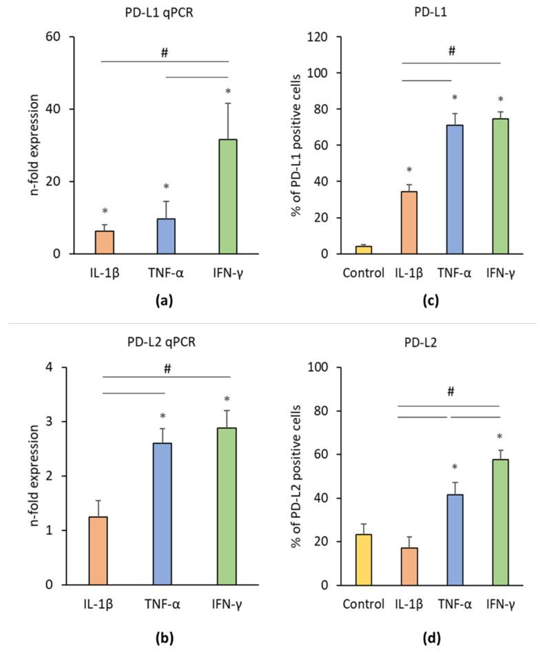 Effect of pro-inflammatory stimuli (IL-1β, TNF-α, and IFN-γ) on programmed cell death 1 ligand 1 (PD-L1) and programmed cell death 1 ligand 2 (PD-L2) production in hPDLSCs. Primary hPDLSCs were treated with either 5 ng/ml IL-1β or 10 ng/ml TNF-α or 100 ng/ml IFN-γ for 48 h. Unstimulated hPDLSCs served as control. PD-L1 ( a ) and PD-L2 ( b ) gene expression levels were determined by qPCR, demonstrating the n-fold PD-L1 / PD-L2 expression compared to the control (n = 1). GAPDH served as internal reference gene. PD-L1/PD-L2 protein levels were investigated by intracellular immunostaining followed by flow cytometry analysis, determining the percentage of PD-L1 ( c ) and PD-L2 ( d ) positive cells. All data are presented as mean value ± S.E.M. received from six independent experiments with cells isolated from six different individuals. * p -value