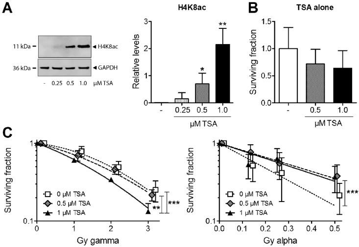 ( A ) Levels of acetylated lysine 8 of histone H4 (H4K8ac) were analysed in MDA-MB-231 cells using Western blot after treatment with 0.25–1 µM trichostatin A (TSA). Glyceraldehyde 3-phosphate dehydrogenase (GAPDH) was used as a loading control. ( B ) Effects of TSA alone on clonogenic survival using 0.5 and 1 µM TSA relative to untreated control cells. * p