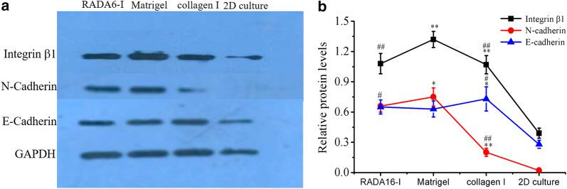 Western blot analysis of key cell adhesion proteins in HO-8910PM cells cultured in RADA16-I hydrogel, Matrigel and collagen I for 7 days. a Immunoblot showed qualitative molecular expression of integrin β1, E-cadherin and N-cadherin in different hydrogel biomaterials. b The curve graph indicated the densitometry quantitation of integrin β1, E-cadherin and N-cadherin protein expression levels normalized to GAPDH. Data represented the mean ± SD in three independent assays and showed statistical difference. *P