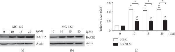 RCAN1 attenuates proteasome-mediated BACE2 degradation. (a) HEK293 cells and (b) HRNLM cells were transfected with pBACE2-mycHis. 48 hours after transfection, cells were treated with 0, 10, 15, or 20 μ M proteasomal inhibitor MG-132 for 12 h. Cell lysates were resolved by 10% SDS-PAGE. 9E10 antibody was used to detect myc-tagged BACE2 protein. β -Actin served as an internal control. (c) Quantification of BACE2 levels. Values represent mean ± SEM; n ≥ 3, ∗ P