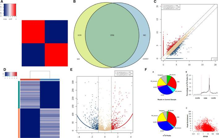 A, Heat map of correlation coefficient from test group and control group. The colours in the panel represent the correlation coefficient of the two samples. Blue shows the two samples have a low correlation coefficient, and red shows the high similarity of the two samples. The plots are performed in R gplots package. B, Venn diagram of the genes number. The plot shows the number of genes methylated in both groups and the number of specific methylated genes. These plots are performed in R VennDiagram package. C, Scatter plot between two groups. RPM values of all identified methylated genes are plotted. The values of X and Y axes in the scatter plot are the averaged RPM values from each group (log2‐scaled). Genes above the top line (red dots, up‐regulation) or below the bottom line (blue dots, down‐regulation) indicate more than 2.0 fold change (default fold change value is 2.0) between the two compared groups. Brown dots indicate methylation level without differentially expression. D, Heat map of gene expression. The heat map shows the 500 genes with the largest coefficient of variation (CV) based on RPM counts. Each row represents one gene, and all the 500 genes are categorized into 10 clusters based on K‐means clustering. Each column represents one sample. The colour in the panel represents the relative expression level (log2‐transformed). The colour scale is shown below: blue represents an expression level below the mean; red represents an expression level above the mean. The coloured bar top at the top panel showed the sample group, and the coloured bar at the right side of the panel indicates the 10 divisions which were performed using K‐means. These plots were performed in R heatmap2 package. E, Volcano plot for test vs control. Red/blue curves indicate 2.0 fold change of differentially methylated gene with statistical significance (red: up‐regulated; blue: down‐regulated). Brown curve indicates non‐differentially methylated gene; fc or q ‐value is not satisfie