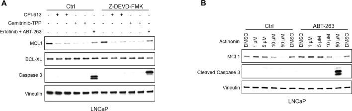 Mitochondria-targeted agents increase caspase-independent MCL1 degradation and synergize with BCLXL/BCL2 inhibitor to induce apoptosis. ( A ) LNCaP cells were pretreated with caspase inhibitor Z-DEVD-FMK (20 μM) for 1 hr, followed by treatment with CPI-613 (200 μM), gamitrinib-TPP (5 μM), or erlotinib (10 μM) and BCLXL/BCL2 inhibitor <t>ABT-737</t> (5 μM) for 5 hr. Efficacy of caspase block by Z-DEVD-FMK was confirmed by blotting for caspase 3. ( B ) LNCaP were treated with actinonin with or without BCLXL/BCL2 inhibitor ABT-263 (500 nM) for 5 hr.