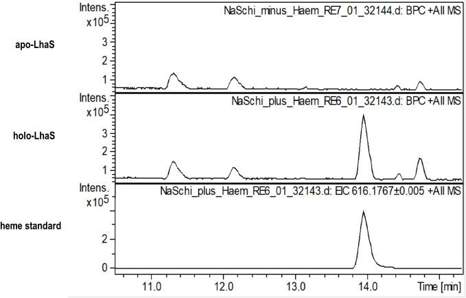 High resolution mass spectra of apo- and holo-LhaS. Spectra of apo-LhaS isolated from E. coli grown in RPMI medium (upper panel), holo-LhaS isolated from LB-medium (middle panel) and a heme standard (lower panel) were recorded on a HPLC-UV-HR mass spectrometer. The samples were diluted with MilliQ-H 2 O and applied to a Dionex <t>Ultimate</t> 3000 HPLC system that is coupled to the MaXis 4G ESI-QTOF mass spectrometer.