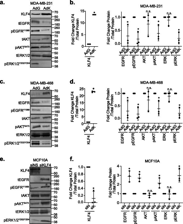 KLF4 represses the EGFR signaling pathway. a Western blot analysis of KLF4, tEGFR, pEGFR (Y1068), tAKT, pAKT (S473), tERK1/2, and pERK1/2 (Y202/Y204) protein levels 3 days after AdGFP or AdKLF4 infection of MDA-MB-231 cells. b Graph depicting western blot quantification. All protein levels were normalized to total protein in the lane to control for loading, and phosphorylated proteins were normalized to their respective unphosphorylated proteins. AdKLF4 lanes were then expressed relative to AdGFP and are graphed with the horizontal bars indicating the median of the values of three replicate blots. Each dot represents the mean value from a different experiment, * p